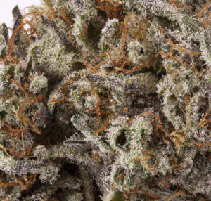 Buy Black Diamond Marijuana Strain UK