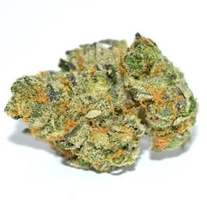 Buy Girls Scout Cookies Marijuana strains Buy Girls Scout Cookies Marijuana strains A well known strain of the marijuana strain. Generally, this is made of mixed indica Strain and the Sativa Strain. Has sharp small and dense buds which are slightly darker. As well it takes a great phenotypes of the Sativa and the indica. In green shades to the usual sativa strain is typical bright green. Small and dense buds with green shade. Slightly darker than the Sativa and Indica green variety. The red bristles are red but longer than usual. Making the buds seem mysterious from a distance. As such Buy Girls Scout Cookies Marijuana strains Buy Girls Scout Cookies Marijuana strains When smoking this strain. We expect a very earthy flavor. With hints of desserts and spices. It's effects tend towards Sativa properties. Making it a mentally stimulating breed. With little body effects when smoking in small doses. The breed is great for social functions. Or creative activities – anything your brain needs to be active and shared. When consumed in larger quantities. Especially by novice users. Can raise stress anxiety and paranoia as with strong Sativa strains. You will usually want to try a blow. Or two before committing to a full joint. More so Buy Girls Scout Cookies Marijuana strains It is a relatively easy growing breed when weighed against other sativas. The weight actually accumulates towards the end of the growth cycle. As the buds begin to inhibit the tall thin frame of the plant. The returns can reach 2.5 oz per plant within the house. With external returns of up to 3 pounds per plant. Therefore Buy Girls Scout Cookies Marijuana strains-UK